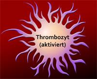 Thrombozyten (aktiviert)
